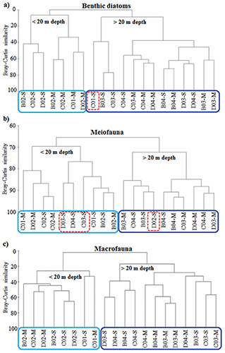 Spatial distribution of microphytobenthos, meiofauna and macrofauna